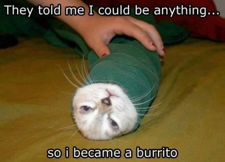 cat to burrito