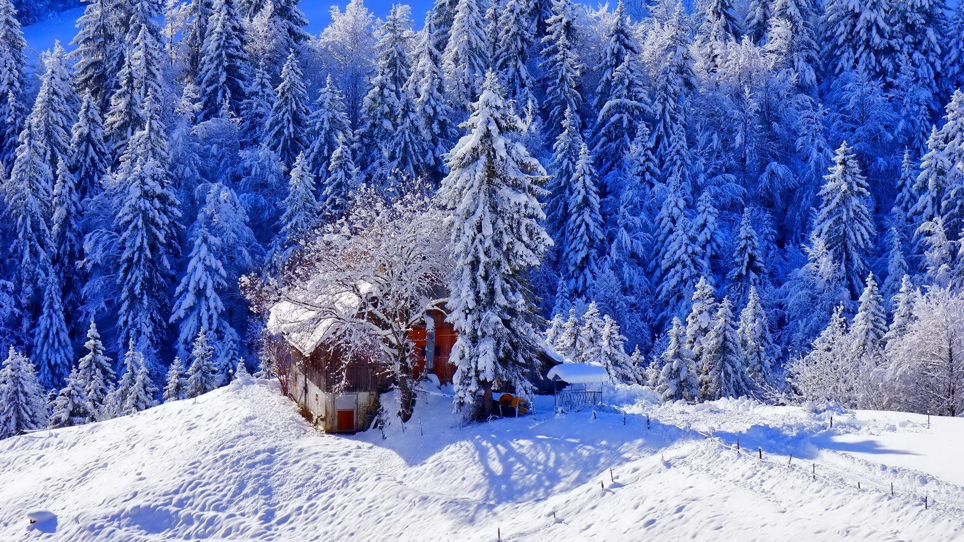 Having For Winter Snow 1920x1080 Winter Wallpaper Snowflake Wallpaper Winter Pictures Hd wallpaper winter snow train forest