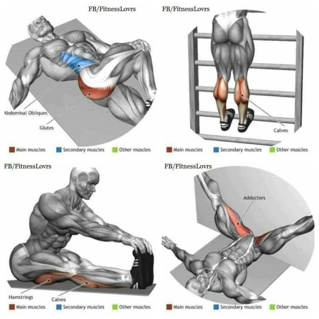 Stretching | Anatomía del Ejercicio | Pinterest | Estiramiento ...