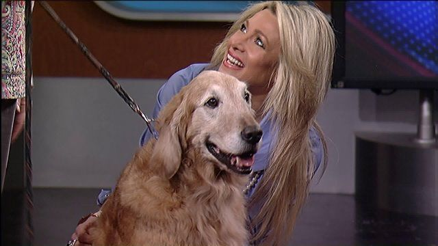 Cleveland Ohio Kathy Cunningham And Her Golden Retriever Toby