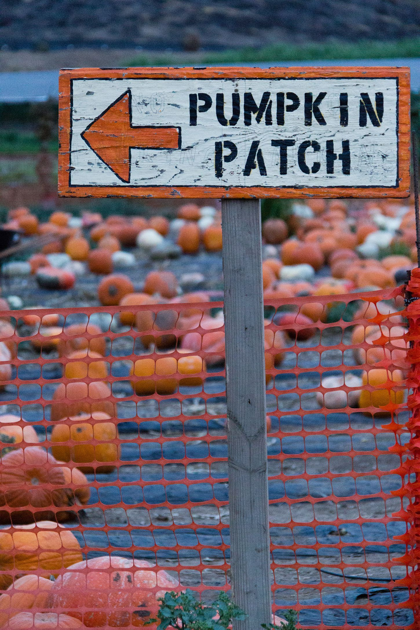 38 Best Pumpkin Farms Near You to Visit With Your Family