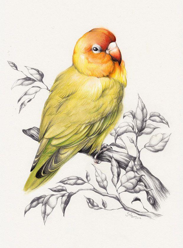 Love Bird Sabine Ten Lohuis Illustration Bird Pencil Drawing Bird Drawings Drawing Pictures Of Birds