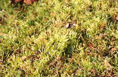 Rasen Im Fruhjahr Pflegen Vertikutieren Und Dungen U Rasen Dungen Garten Gartentipps