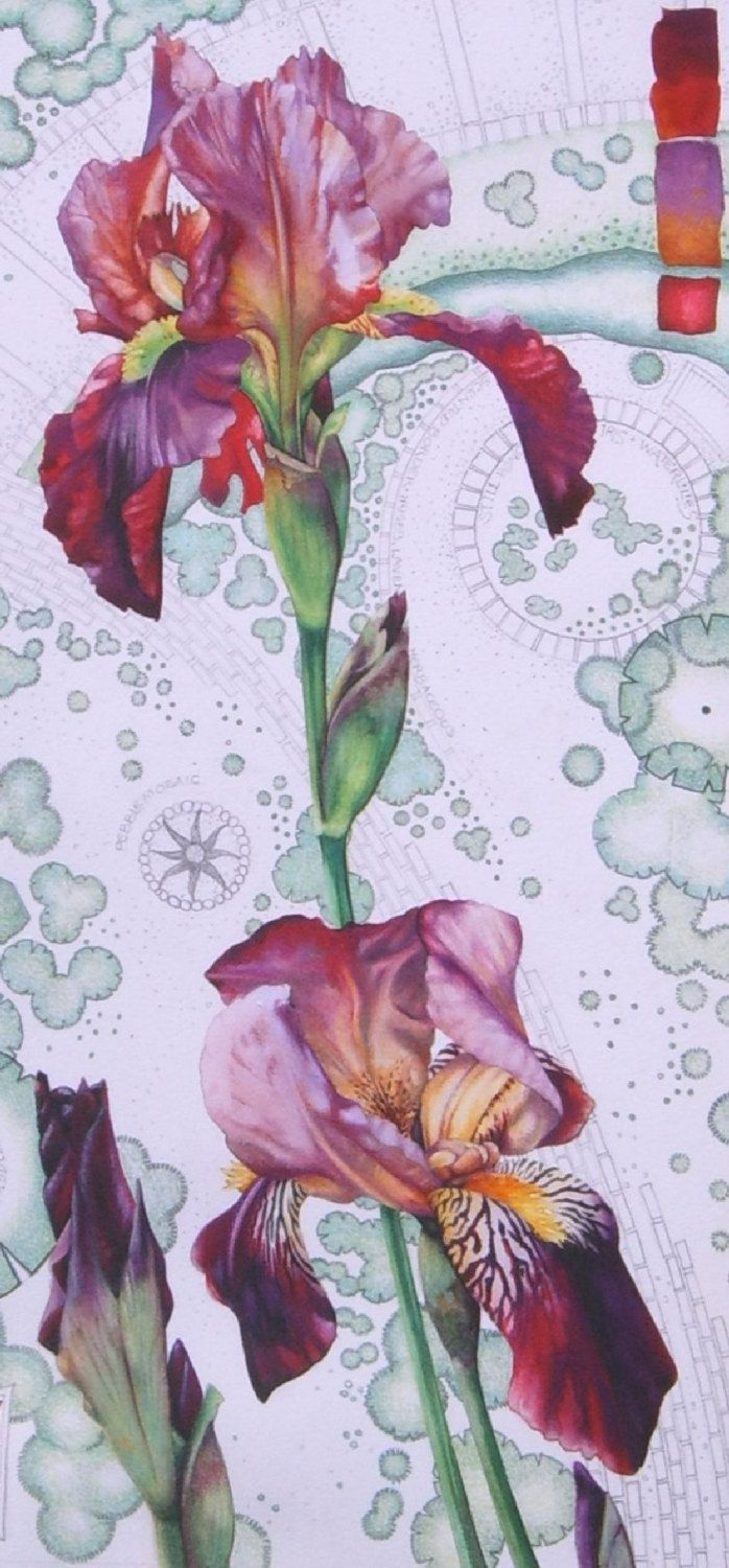 Original Watercolour Painting Of Lilac And Dark Red Bearded Iris