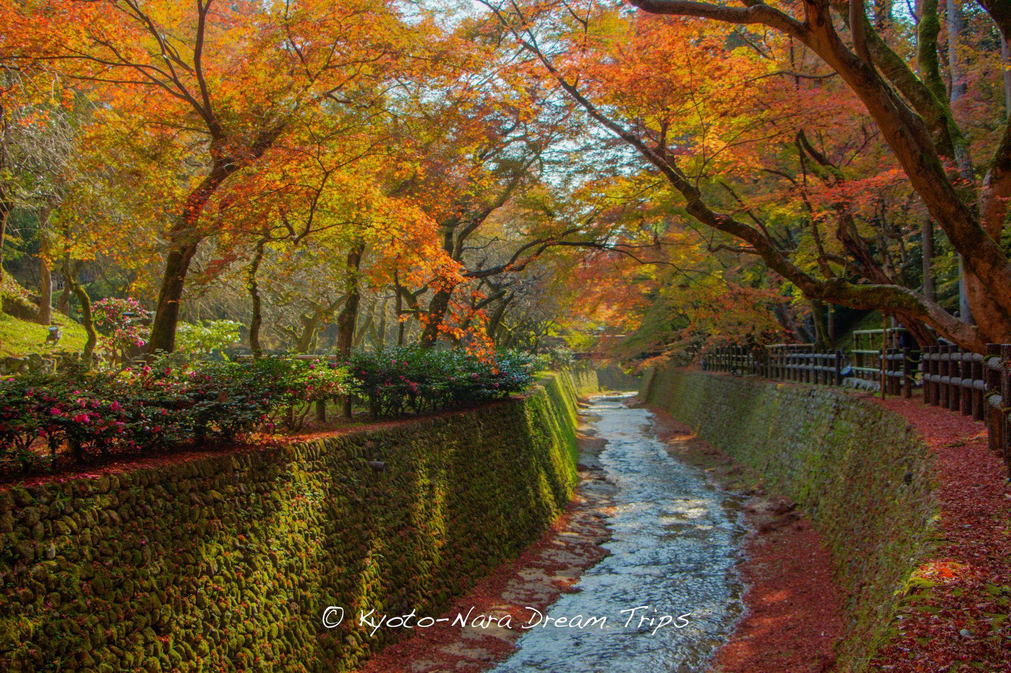 Autumn in the Maple Gardens of Kitano Tenman-gū in Kyoto. | Kyoto ...