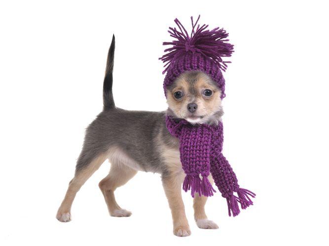 Coordinado de bufanda y gorro tejidos para perro | Bordado y Tejido ...