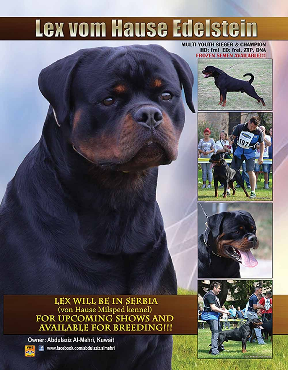 Lex Will Be In Serbia Von Hause Milsped Kennel For Upcoming