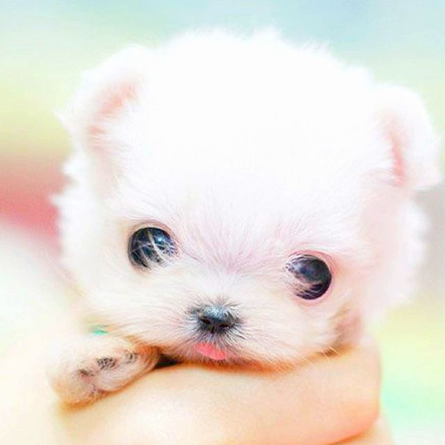 Crazy Cute Animal Photos Too Cute Puppy Dog Cute Little Animals Cute Baby Animals Puppy Dog Pictures