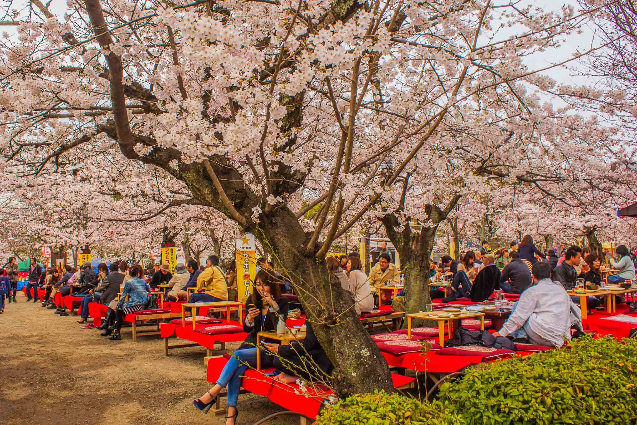 Pin By Habibah Tien On Sakura In 2020 Cherry Blossom Japan Blossom Flowers