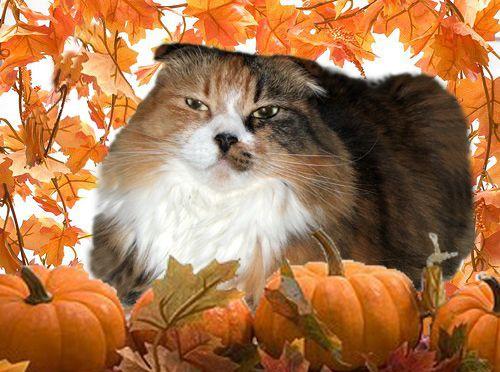 Abigail in the Pumpkin Patch 2013