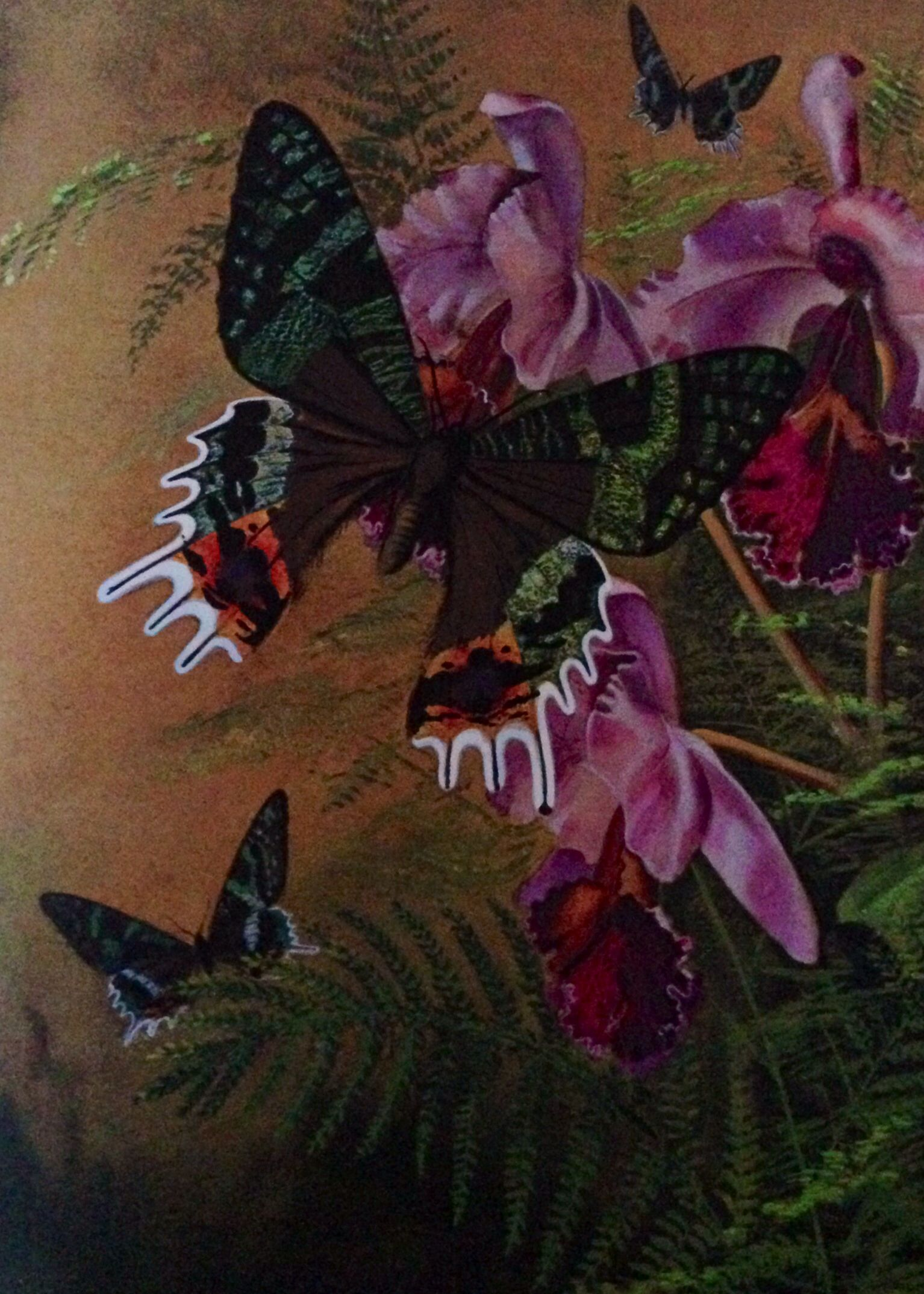 How to Paint Exotic Butterflies and Moths by Ralph S. Coventry. Chrysiridia madagascarensis from Madagascar