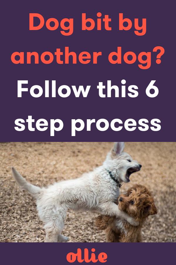 Pin On Helpful Dog Advice