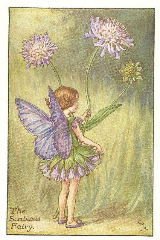 http://www.wellandantiquemaps.co.uk/lg_images/The-Scabious-Fairy.jpg