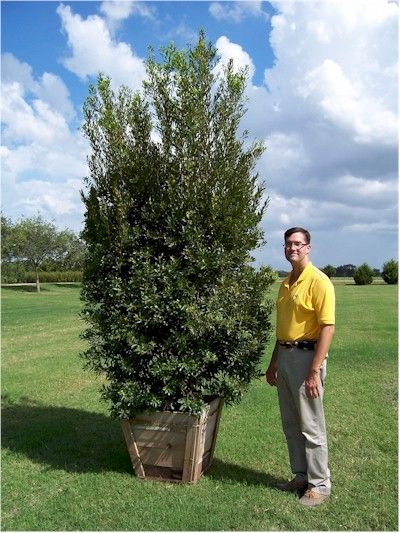 Pin By A To Z Landscaping Llc On Hedge Hogs Fast Growing Evergreens Native Plant Gardening Fast Growing Plants