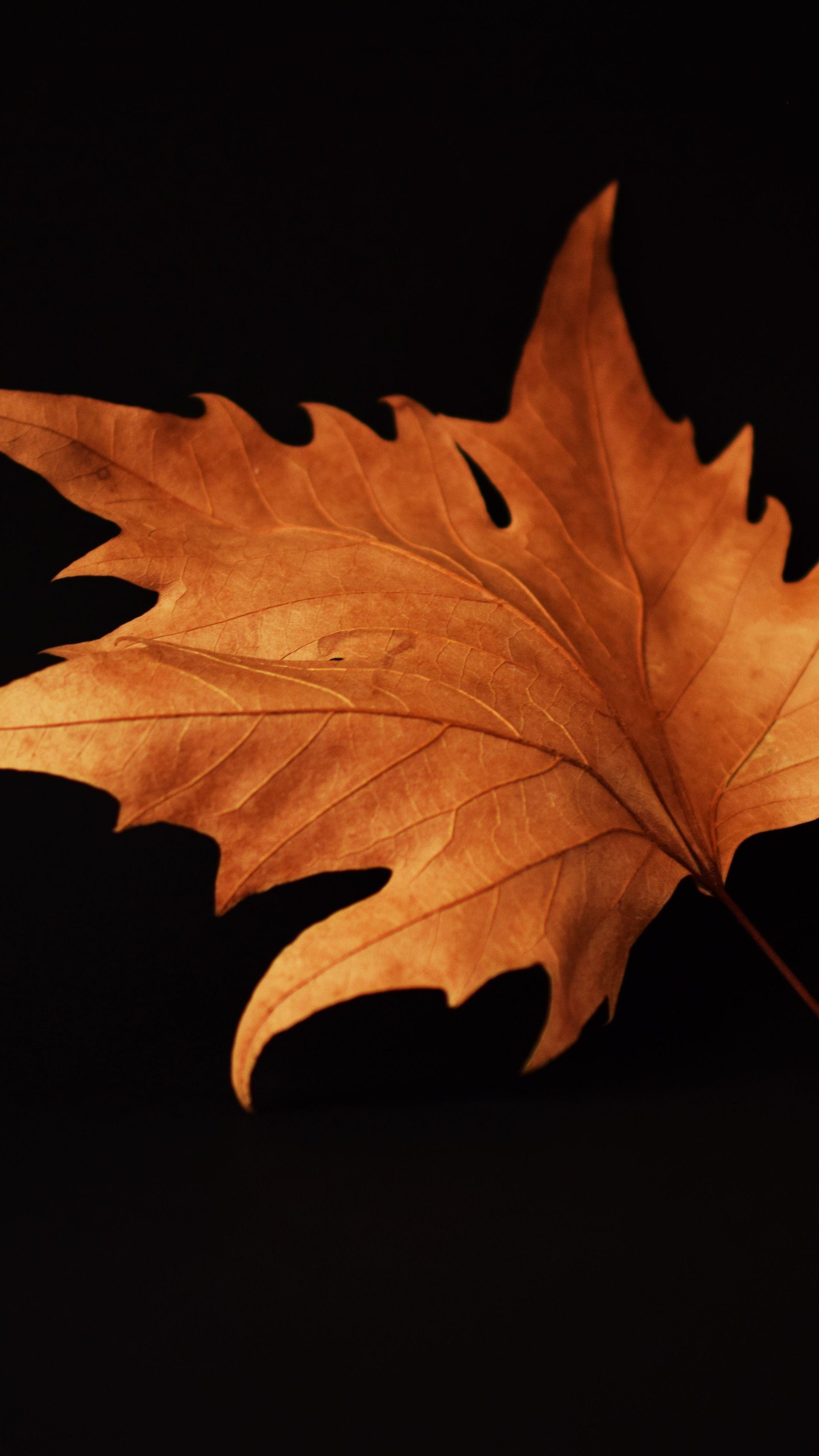 Nature Autumn Leaf Black Background Wallpapers Fall Wallpaper Autumn Leaves Wallpaper Black Background Wallpaper