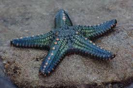 star fish에 대한 이미지 검색결과