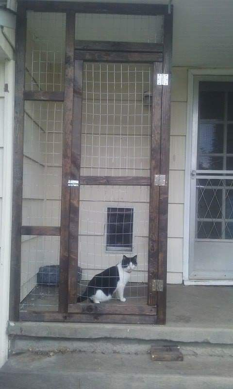 Catio Hacks Every Cat Owner Should Know | Cat owners ...
