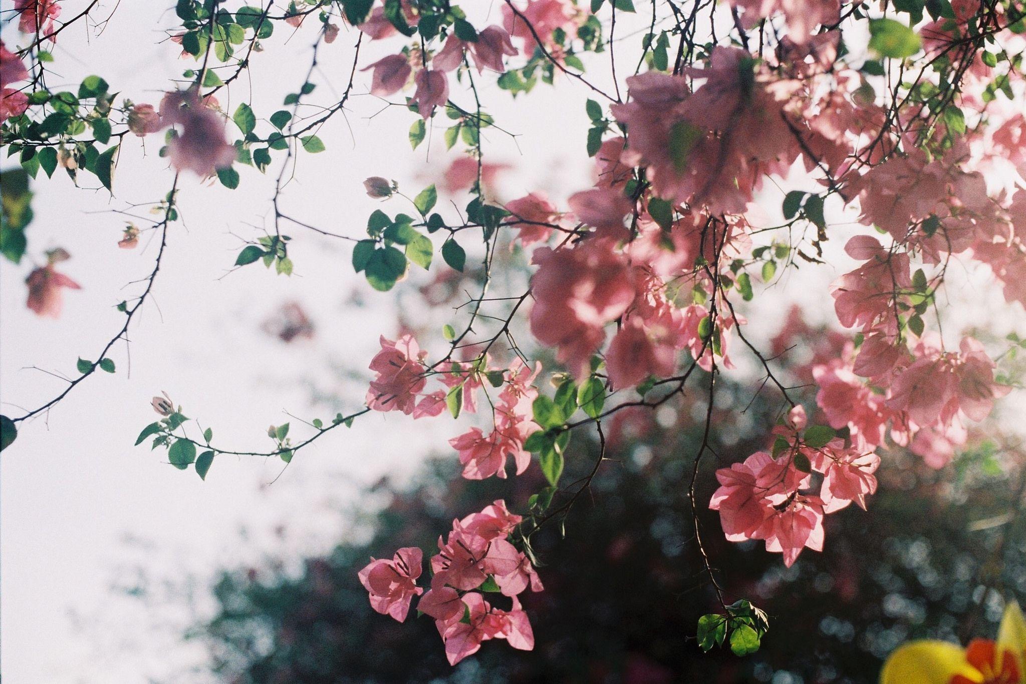 Pin By M M A I On Floww Plants Pretty Flowers Planting Flowers