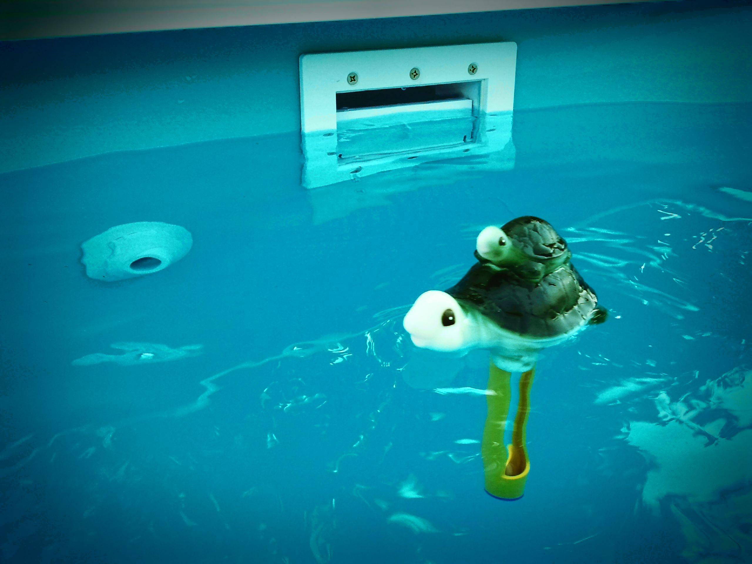 Term metro flotante con forma de tortuga fabricante - Fabricante de piscinas ...