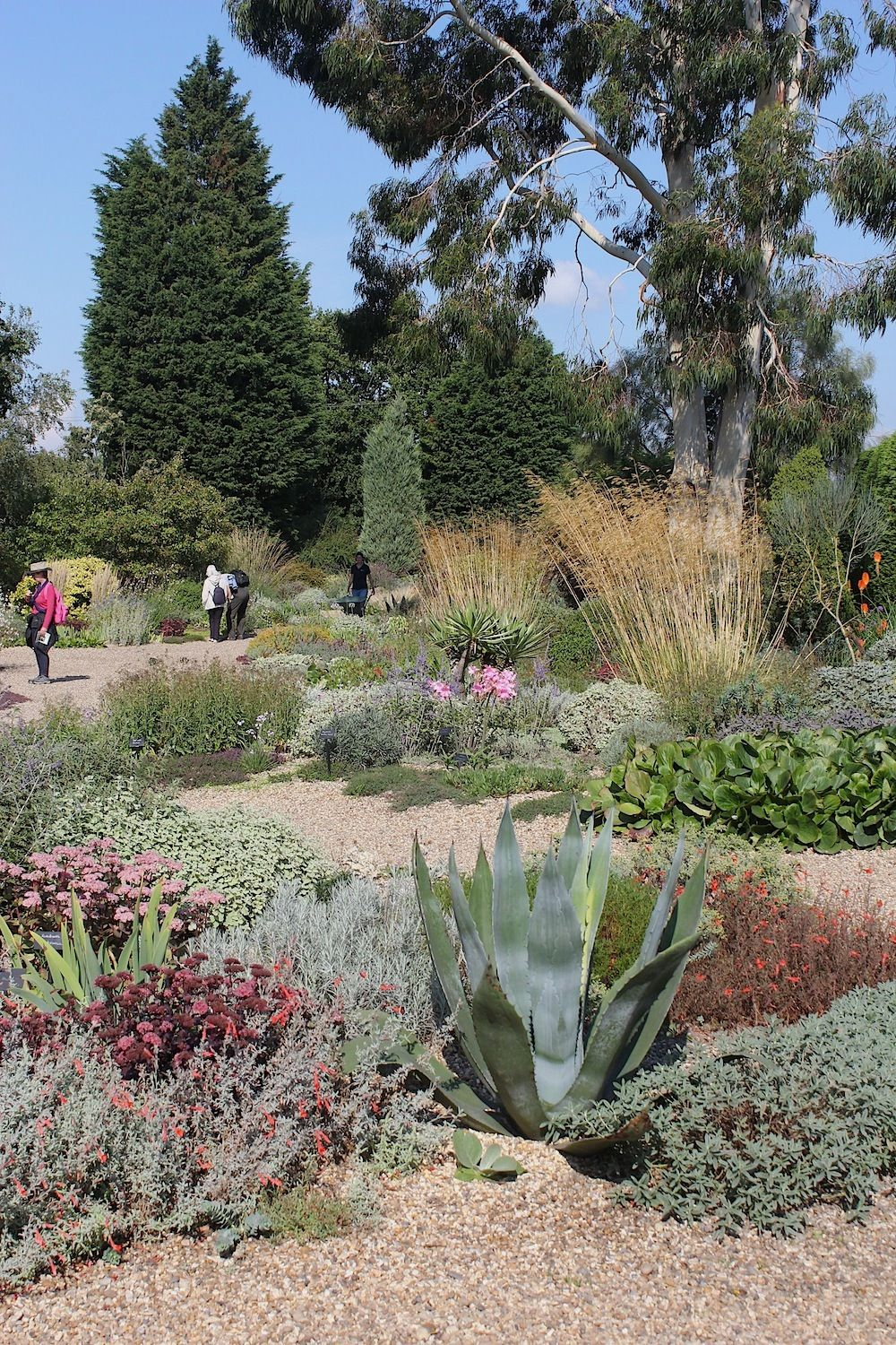 beth chatto gravel garden book on inspiration from beth chatto s garden 9 tips for drought tolerant planting drought tolerant perennials gravel garden drought tolerant garden pinterest