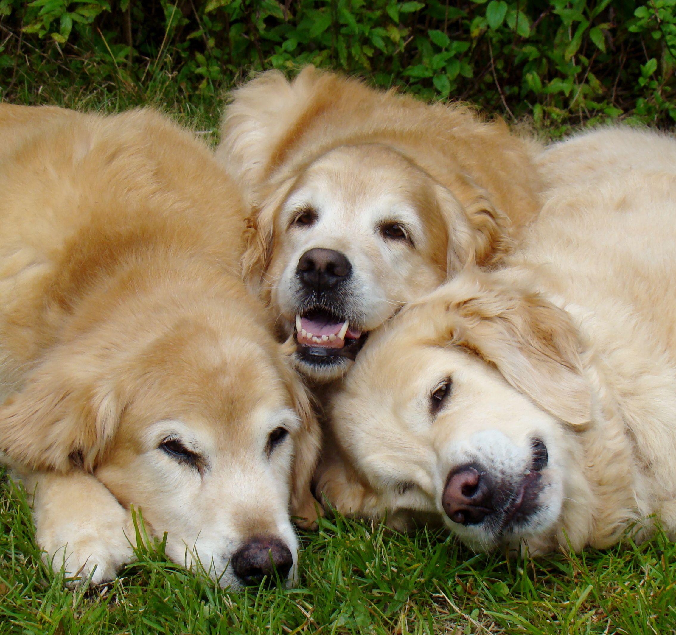479 Best Bentley Images On Pinterest: Best Buddies Tyler, Brie And Bentley