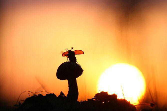 К взлету готов! #Майский_жук #гриб #взлет #Вечер #закат # ...
