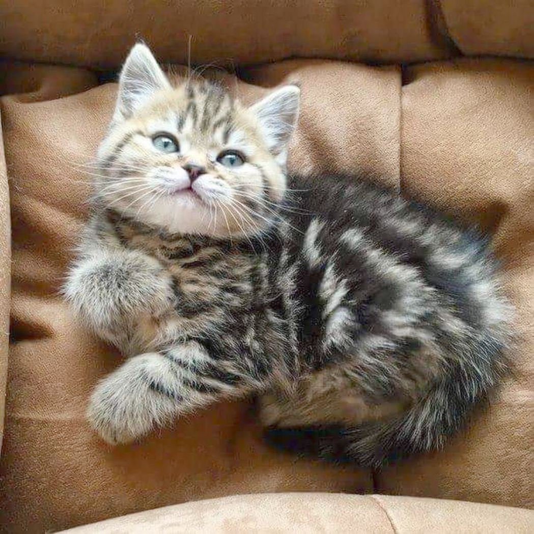 Videos Of Cute Animals That Can Kill You, Kittens For