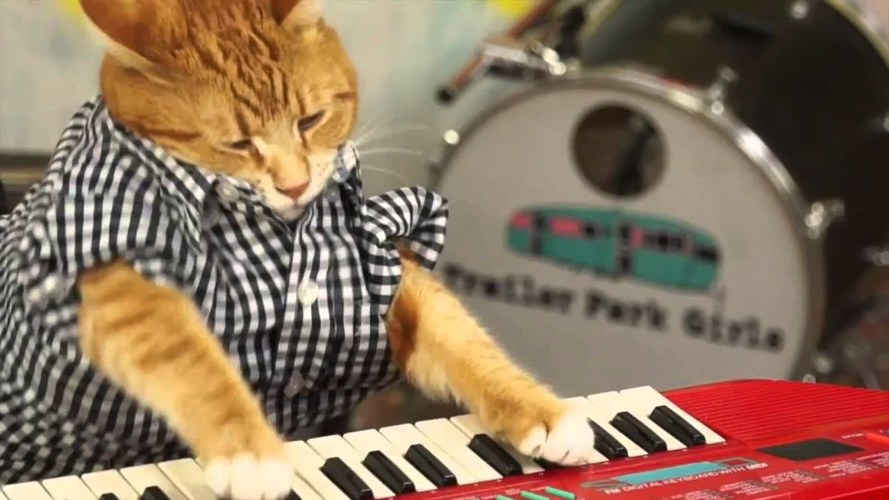 Amazing! KEYBOARD CAT 96 TEARS