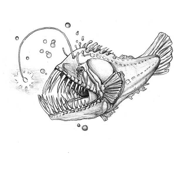 Luminescene Angler Fish Coloring Pages Best Place To Color Fish Coloring Page Angler Fish Drawing Angler Fish