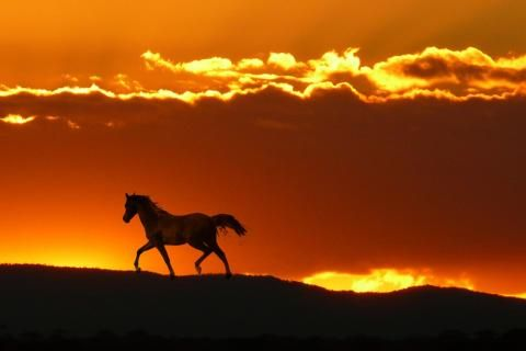 27Walls: Horse in horizon pasture hills fire sky sunrise sunset clouds desktop bakcgrounds