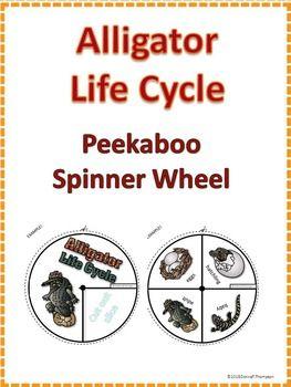 Alligator Life Cycle $