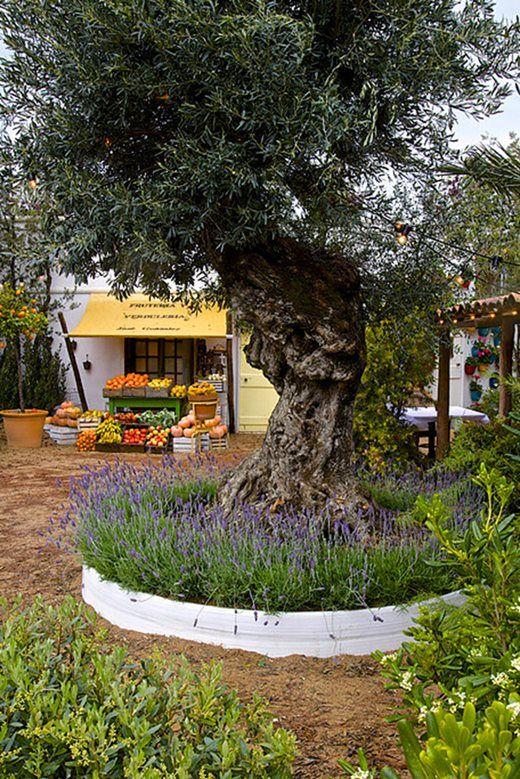 Garden Design: Mediterranean Garden Plants / RHS Gardening