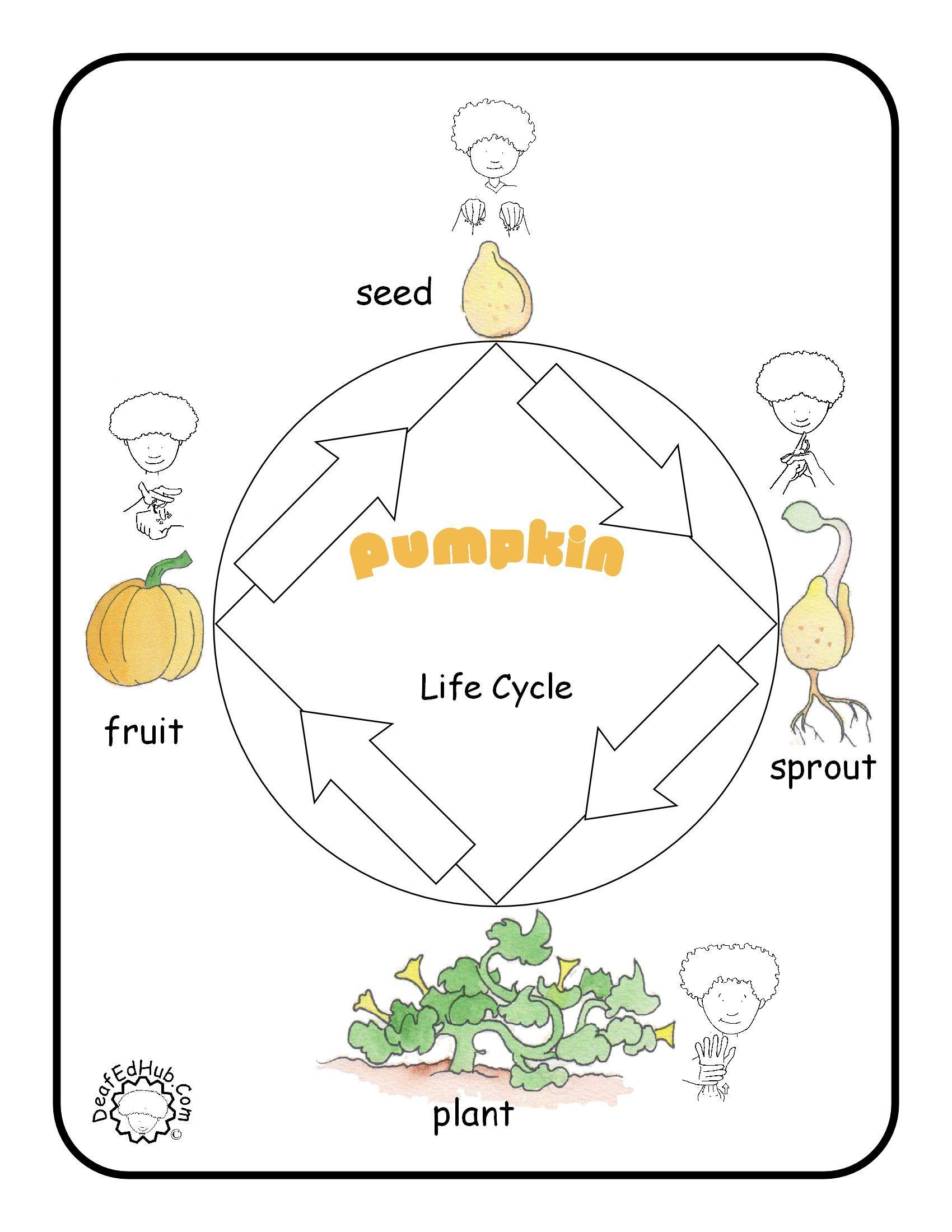asl poster pumpkin lifecycle [ 1700 x 2200 Pixel ]