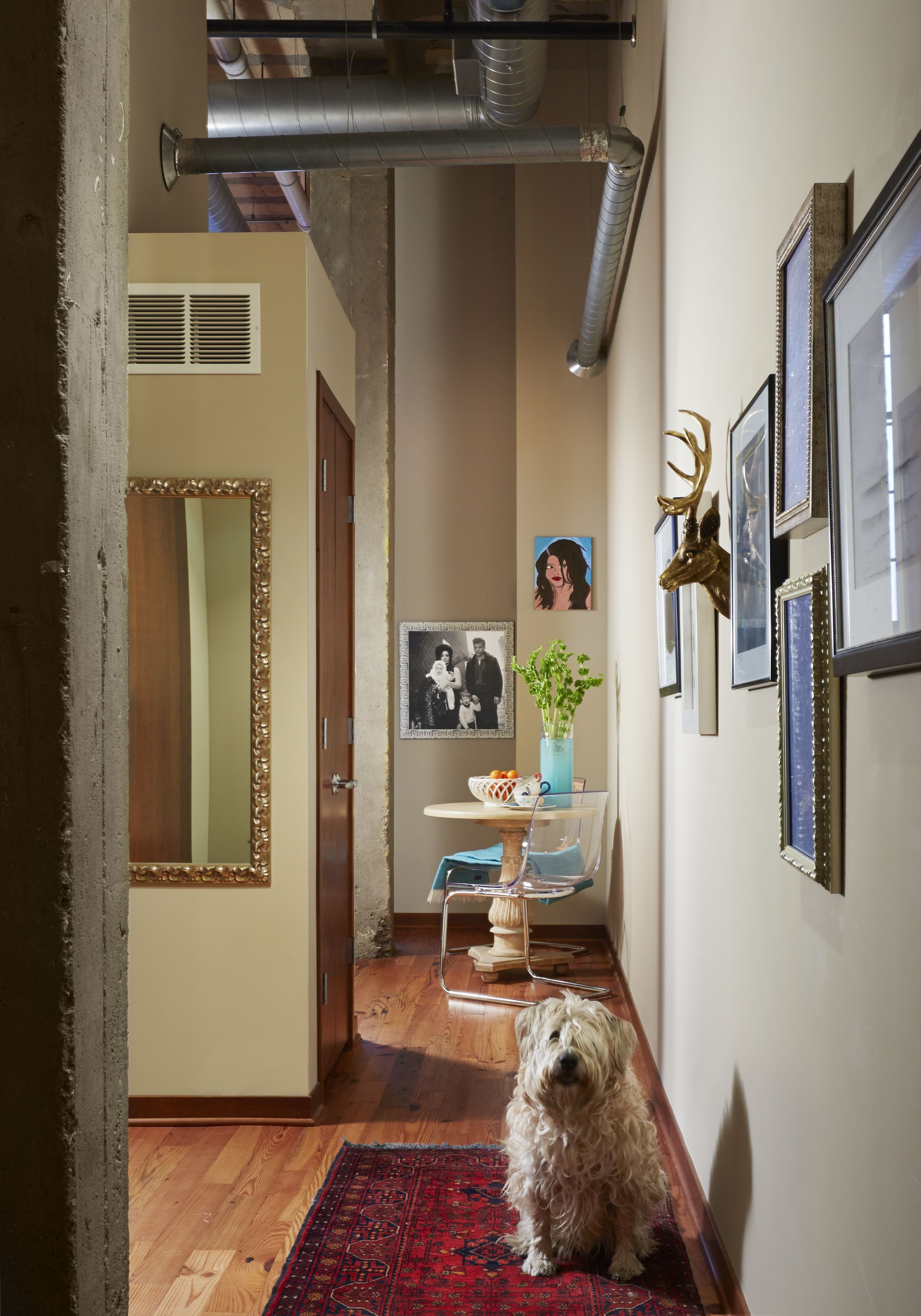 How to get rid of dog drool spots for good interior