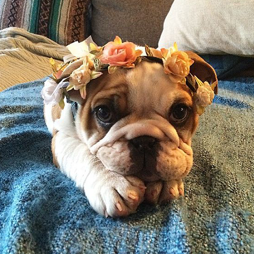 Want more ? Click to link https://www.pinterest.com/dog_world/