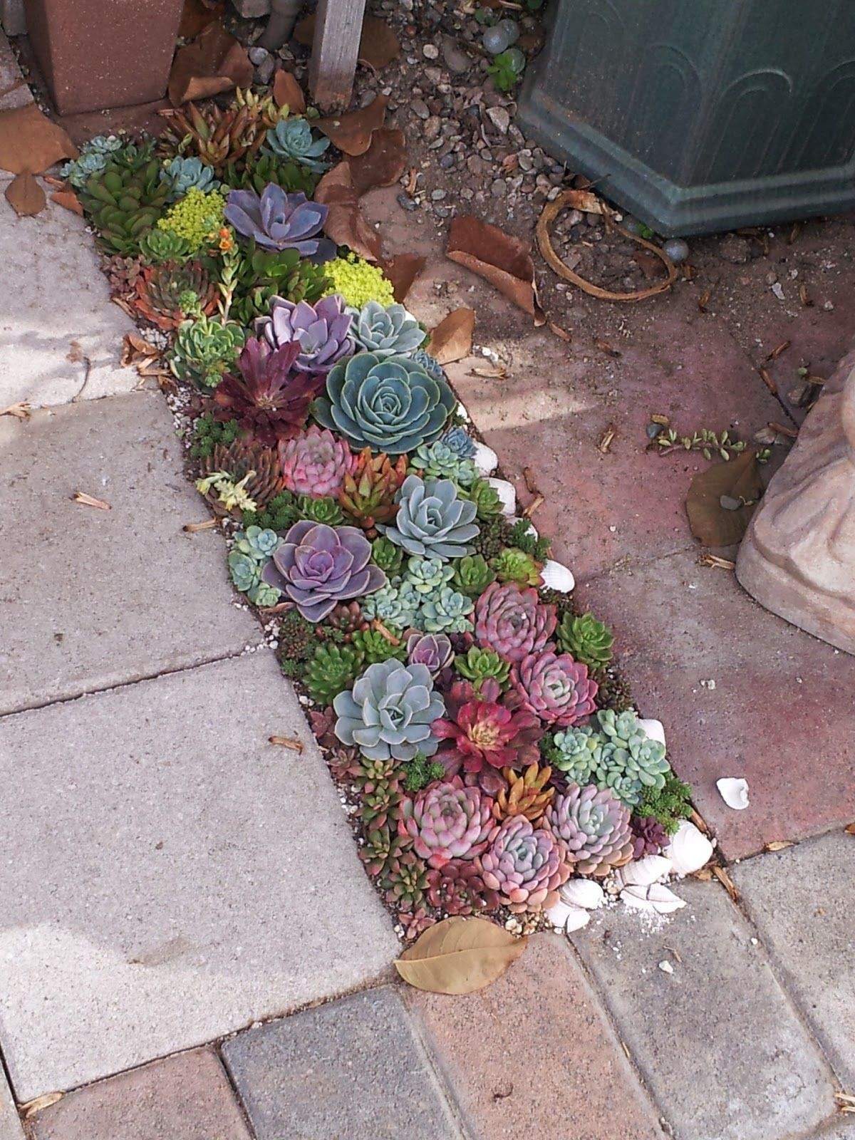 Photo of Succulent landscape idea from California Cactus Center