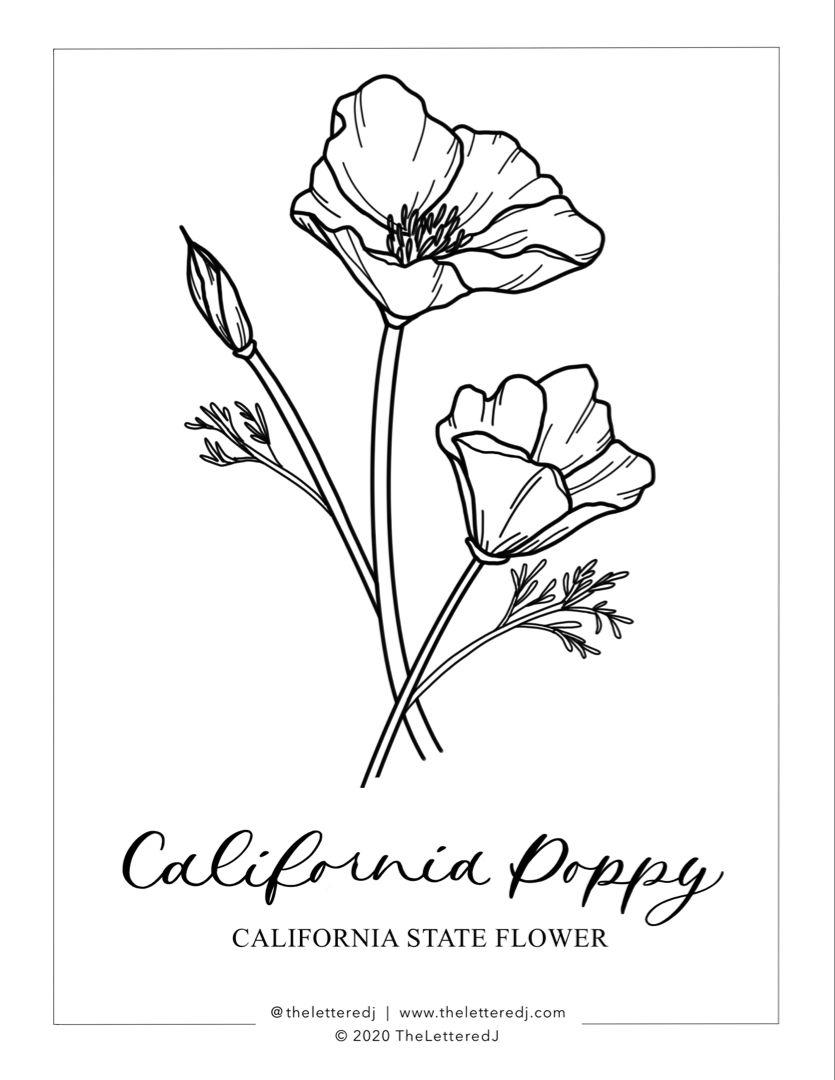 California Poppy Line Art Coloring Page California Poppy Poppies Line Art