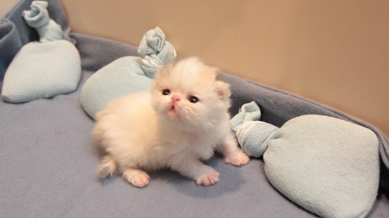 Marshy Is Growing Up So Quickly Cute Animals Baby Animals Animals