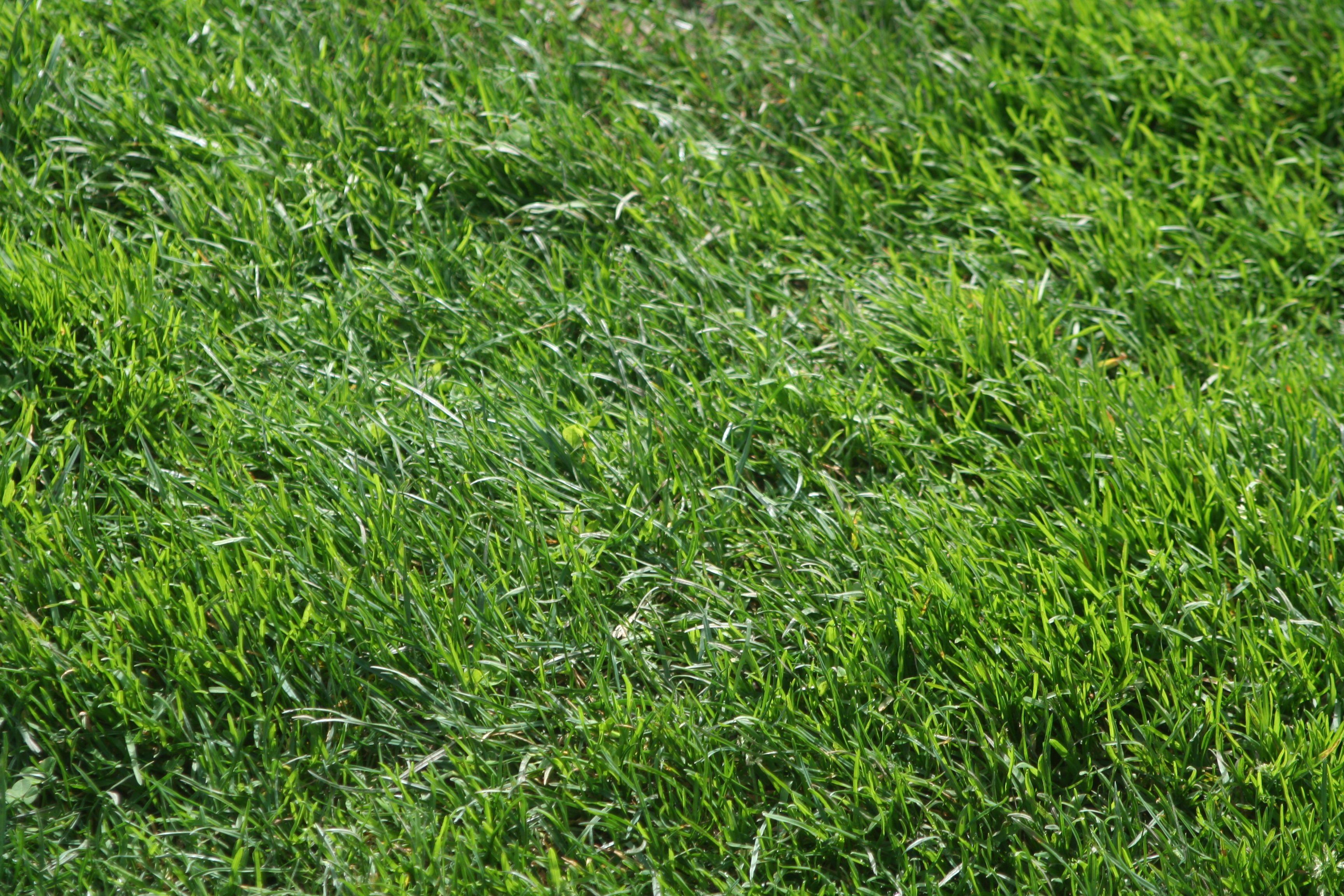 Texture Planting Grass