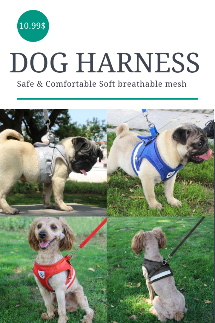 dog harness how to put it on