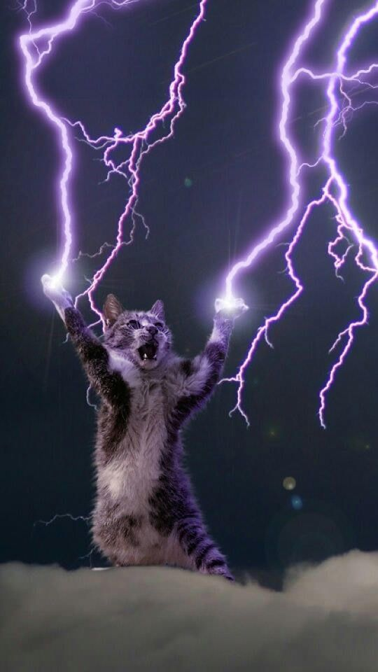 All Hail The Lightning God Cat A Nice Phone Wallpaper In 2019