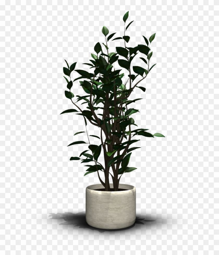 Find Hd Transparent House Plant Png Png Download To Search And Download More Free Transparent Png Images House Plants Plants Transparent