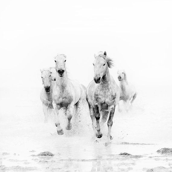 Wild white horses black and white photography modern minimal nature photograph animals
