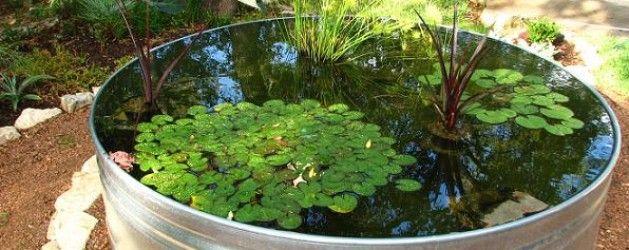 Cómo hacer un estanque acuático con plantas y peces Pinterest
