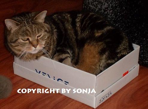 Er liebt Schachteln sehr...
