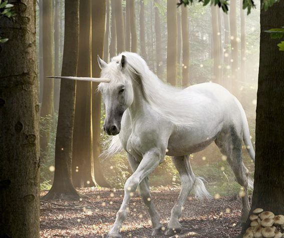 White Unicorn Forest | Unicorn fantasy, Unicorn pictures ...