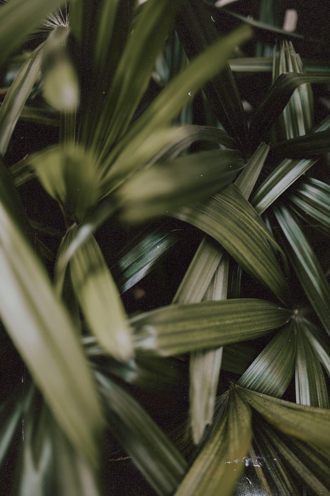 Pin by Adri Van Groningen on beauty in 2020 Green