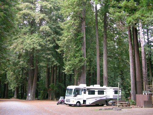 This Is Bigfoot Country And Bigfoot Needs Big Trees The Emerald Forest Rv Park And Campground Has Plenty Of Rv Parks And Campgrounds Rv Parks Rv Destination