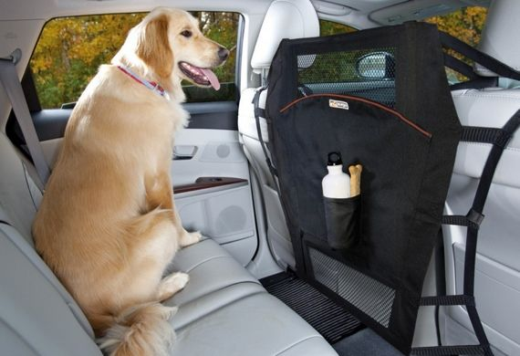 travel with dog in car