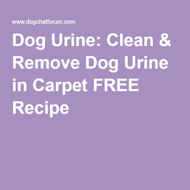 Dog Smell In Area Rug: Dog Urine: Clean & Remove Dog Urine In Carpet FREE Recipe
